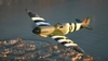 Aircraft for Sale: 2007 Supermarine Mk.XXVI Spitfire